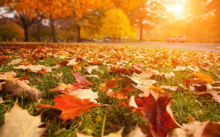 Falling Leaves in Your Drainage System