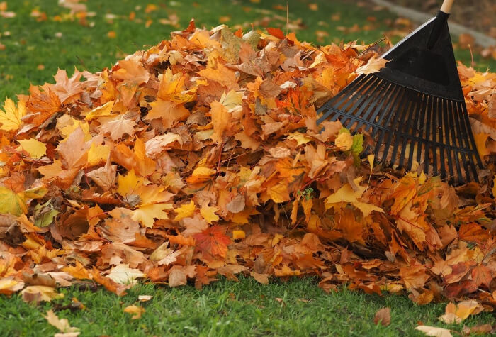 Clear Up Fallen Leaves
